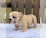 Small #2 Bulldog