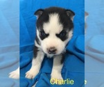 Image preview for Ad Listing. Nickname: Charlie