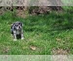 Small #2 Puggle