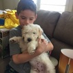 Goldendoodle Puppy For Sale in OXNARD, California,
