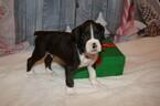 Small #4 Boxer