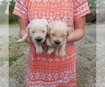 Image preview for Ad Listing. Nickname: Akc litter of 9