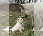 Small #59 German Shepherd Dog