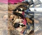 Fergies puppies