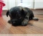 Puppy 2 Pom-A-Nauze
