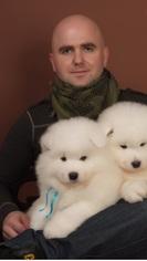 Samoyed Puppy For Sale in SANTA CLARA, CA