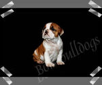 Image preview for Ad Listing. Nickname: Toffee