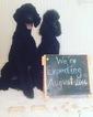 Poodle (Standard) Puppy For Sale in WYNNE, AR