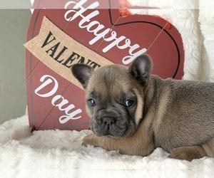 French Bulldog Puppy for sale in MILBURN, OK, USA