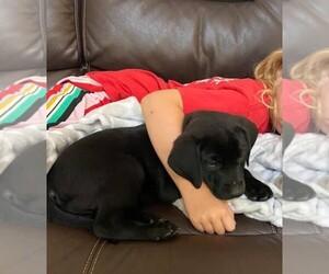 Labrador Retriever Mix Dog for Adoption in KEYSVILLE, Georgia USA
