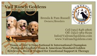 Golden Retriever Puppy For Sale in TEMECULA, CA, USA