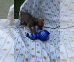 Small #1 Taco Terrier