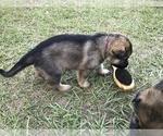 Small #28 German Shepherd Dog