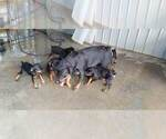 Small #57 Rottweiler