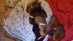 Dachshund Puppy For Sale in ENFIELD, CT