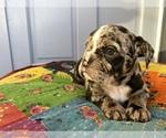 Small #16 Bulldog