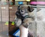 Puppy 1 Pom-A-Nauze