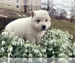 Small #47 German Shepherd Dog