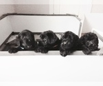 GIANT SCHNOODLE LITTER