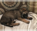 Small #32 German Shepherd Dog