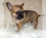 Puppy 2 Cheeks