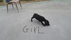 Great Dane Puppy For Sale in JACKSONVILLE, GA