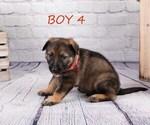 Small #11 German Shepherd Dog-Wolf Hybrid Mix