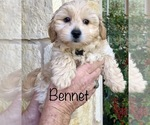 Image preview for Ad Listing. Nickname: Bennet
