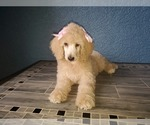 Small #14 Poodle (Standard)