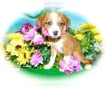 Small Jack-Rat Terrier Mix