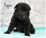 Image preview for Ad Listing. Nickname: PEPPER