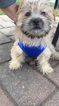 Morkie Puppy For Sale in PARSIPPANY, NJ, USA