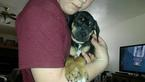Catahoula Leopard Dog Puppy For Sale in RATHDRUM, ID, USA