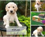 Image preview for Ad Listing. Nickname: POPLAR
