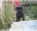 Puppy 8 Jug
