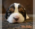 Van Halen Ready to go home April 27th