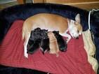 Beautiful pups