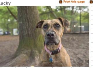 Mutt Dog For Adoption in CHARLESTON, SC