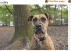 Mutt Dog For Adoption in CHARLESTON, SC