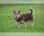 Small #7 Jack Russell Terrier
