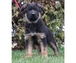 Puppy 0 German Shepherd Dog