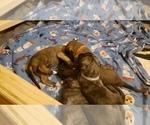Small #6 Irish Wolfhound