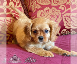 Image preview for Ad Listing. Nickname: Mia