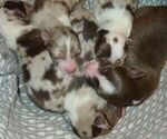 Image preview for Ad Listing. Nickname: Shade Tree Pups