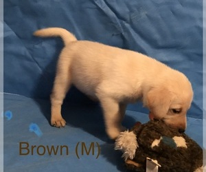 Puppies for Sale near Stoughton, Wisconsin, USA, Page 1 (10