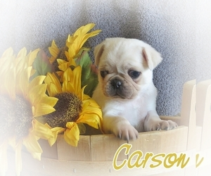 Pug Puppy for sale in ELVERSON, PA, USA