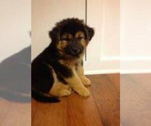 German Shepherd Dog Puppy for sale in KALAMAZOO, MI, USA