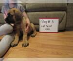 Small #10 Mastiff