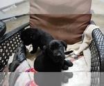 Small #32 Labrador Retriever