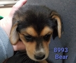 Image preview for Ad Listing. Nickname: Bear